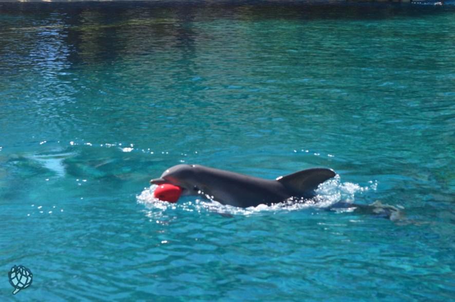 Secret Garden golfinhos4