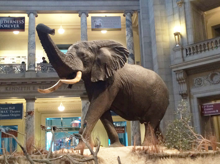 Museu-de-Historia-Natural-de-Washington-3