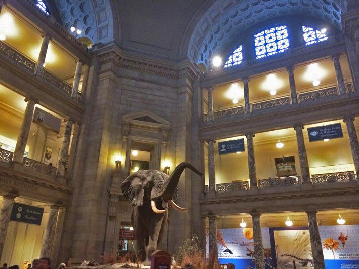 Museu-de-Historia-Natural-de-Washington-8