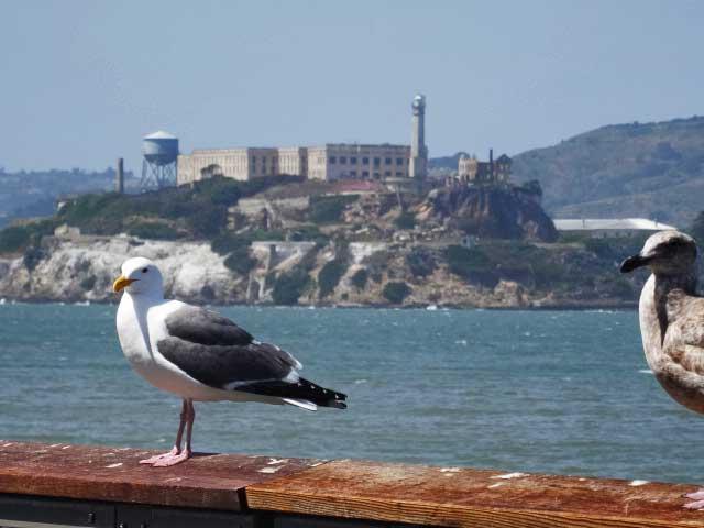 San-Francisco-fishermans-wharf-passaro