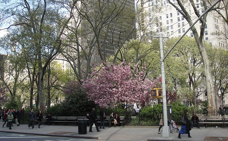 como e new york na primavera 1
