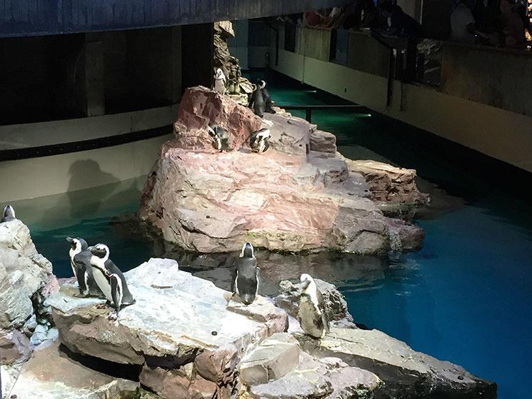 aquario-em-boston-4