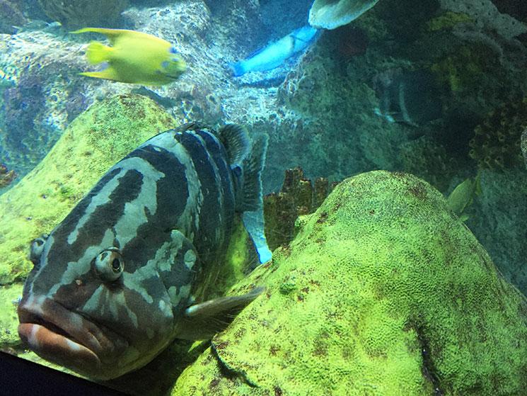 aquario-em-boston-peixe