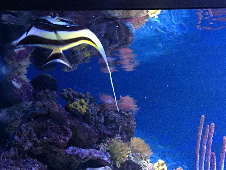 aquario-em-boston-peixes