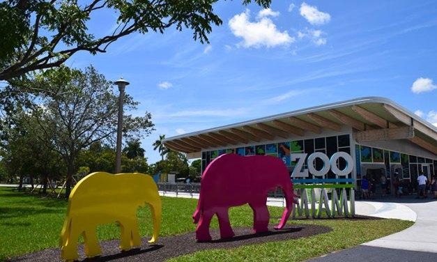 Zoo de Miami – imperdível para ir com as crianças