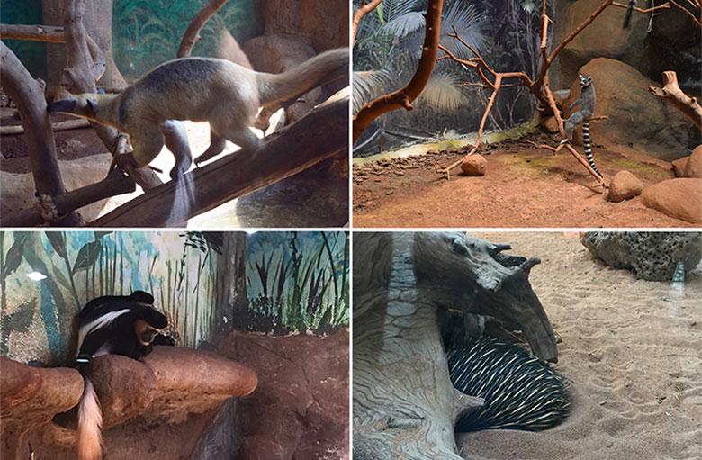Animais no Aquário de São Paulo