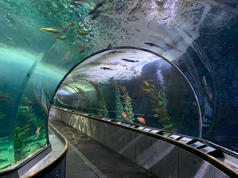 Aquarium of the Bay em San Francisco