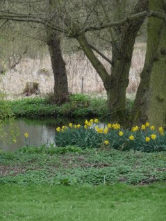 I have so enjoyed these Daffs by the pond. Their reflections have been lovely fodder for photos.