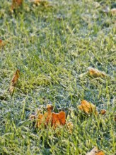 Frost Lined and Crunchy
