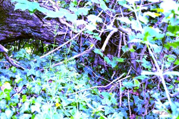 The door frame becomes legs walking down the leafy steps to the Ivy path. But what I saw through the gap ... I almost became lost in the very sight of the World of Faery.