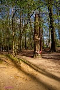 Memorial Tree.