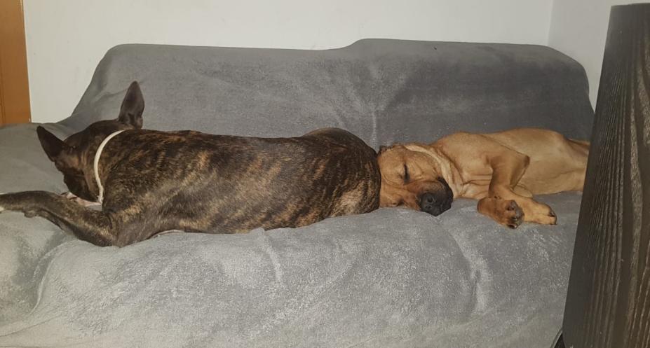 Durmiendo a pierna suelta