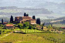 Vineyard - Tuscany