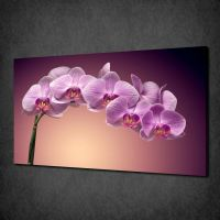 ORCHID CANVAS PRINT PICTURE