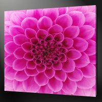 ABSTRACT PINK DAHLIA FLOWER MODERN WALL ART CANVAS PRINT ...