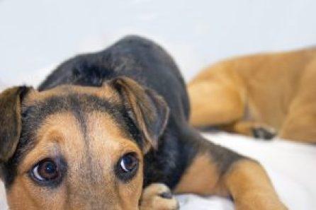 7 coisas que o cachorro sabe sobre você mesmo que seja segredo