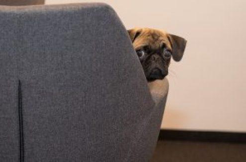 3 atitudes que deixam o cachorro triste
