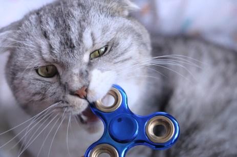Por que o gato morde o dono