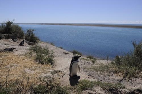 J+40 Un selfie avec un pingouin (2/2)