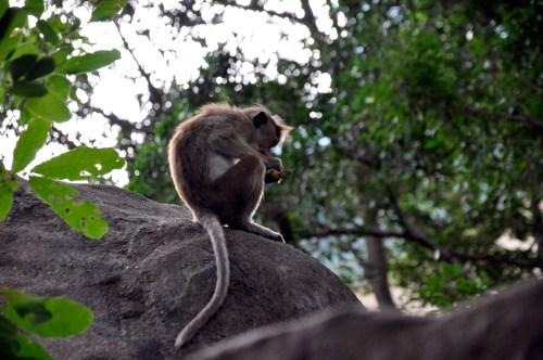 J+326 Donner à manger à un singe
