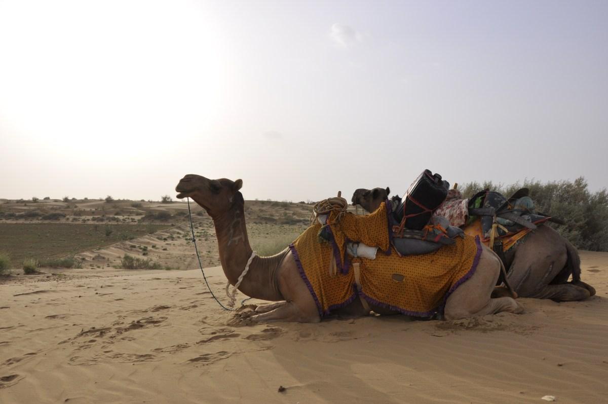 J+344 Une nuit dans le désert…