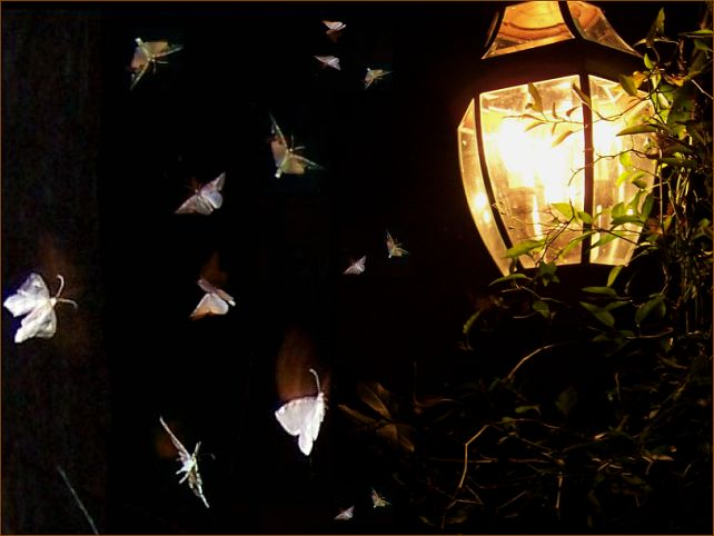 Image result for moth at night
