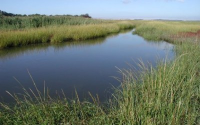 Wicked Local: Report: Water quality in most Cape ponds, bays unacceptable
