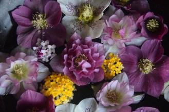 February: Hellebores & Edgworthia