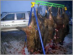 Clube Trancosense - montaria javalis