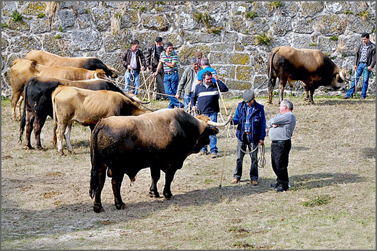 A feira do gado