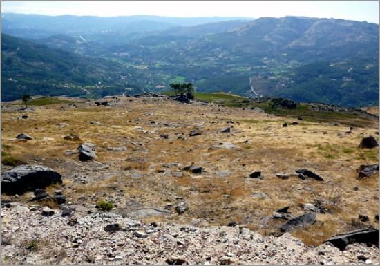 Terrenos florestais e agrícolas não registados vão passar para o Estado - Capeia Arraiana