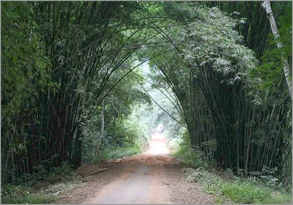 Maiombe - floresta virgem e picada no interior - Capeia Arraiana