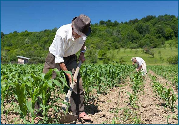 Agricultura não cativa os jovens