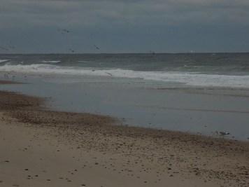 birds-on-the-beach-1