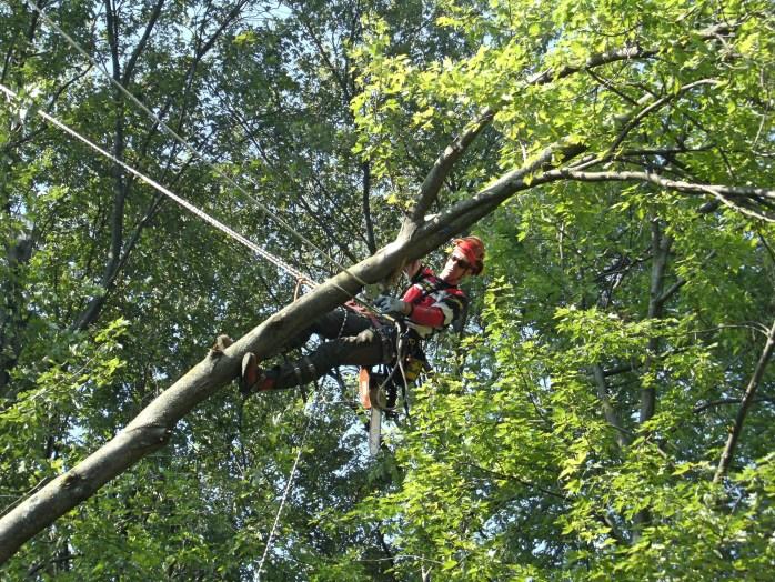 Image of Phil Whetstone arborist