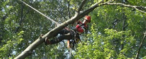Header for Capella Tree Service
