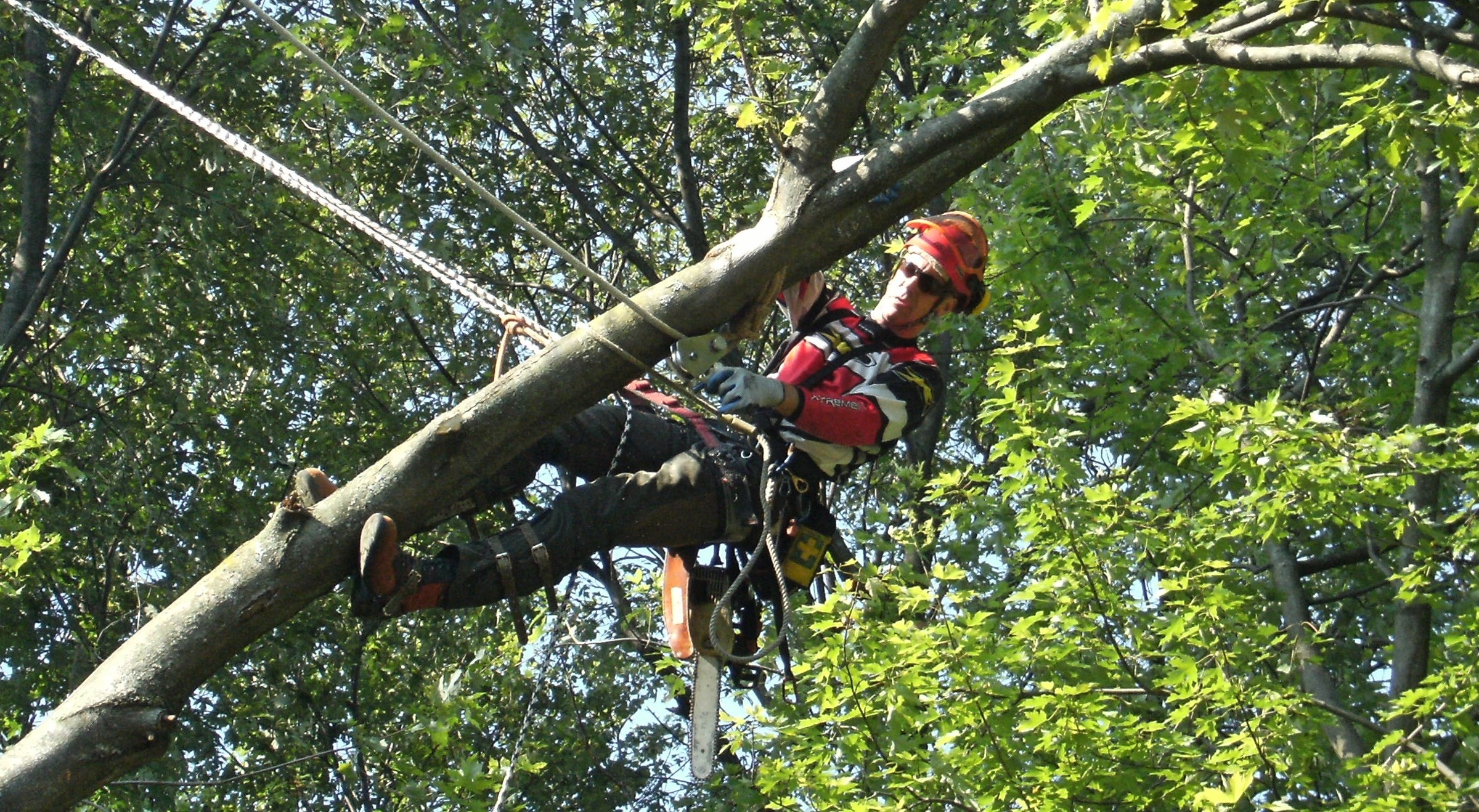 Capella Tree Service Guelph