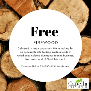 Free Firewood Guelph