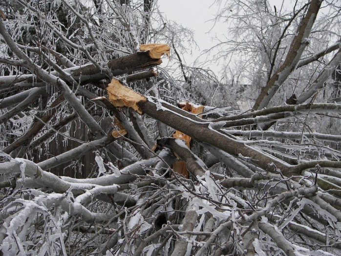 winter tree care checklist