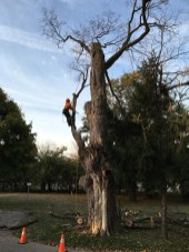tree-service-guelph