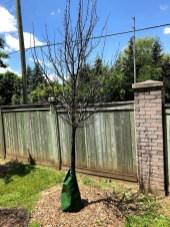 tree-planting-waterloo