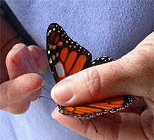 holdingbutterfly