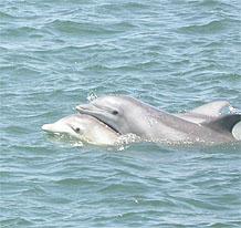 whalewatchmomandbaby
