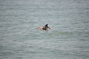 dolphins4