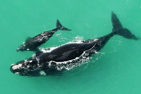 De Hoop Whale Watching (Image: Supplied)