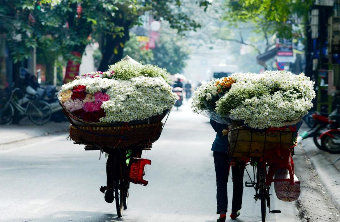 Cúc họa mi xuống phố, Hà Nội sang đông | Kênh Thời Tiết