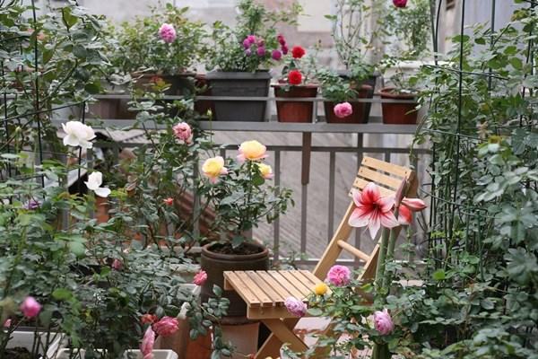 5 loại cây thích hợp trồng ở ban công – Dream Garden