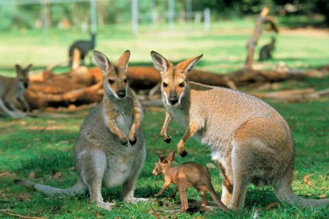 Tour du lịch Australia