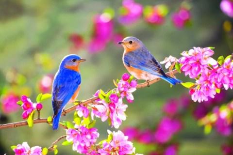 Quê hương là gì hở mẹ? Kỳ 66: Sự kì diệu của mùa xuân