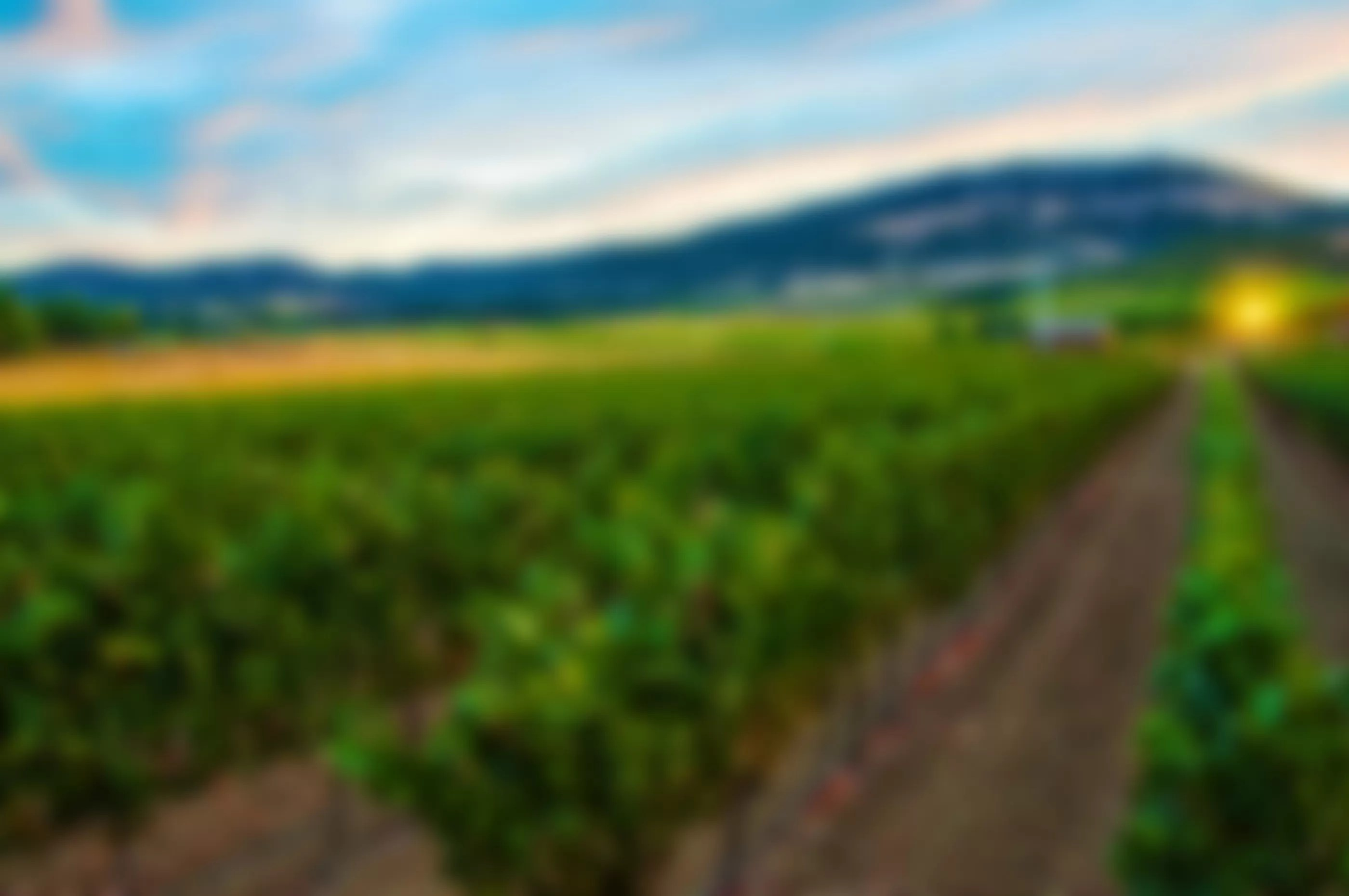 2Hawk Vineyard Blurred